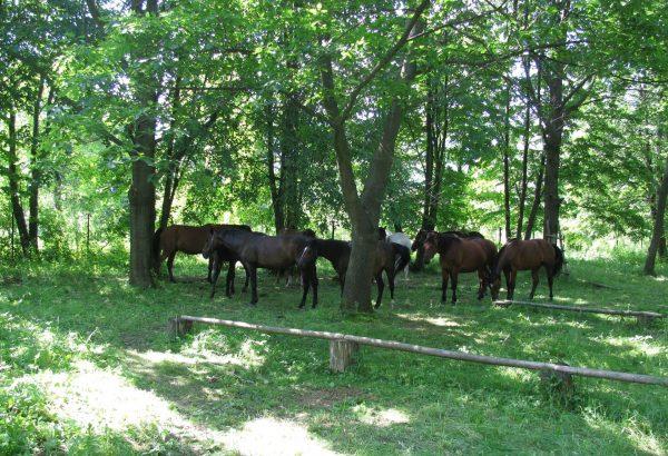 02w - - Lokum naszych koni w Rudawce,