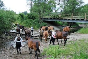 Odławianie koni przed siodłaniem