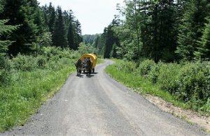 20. Piękna droga prez las